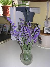 lemon verbena lady u0027s herb garden a reader u0027s request a list of
