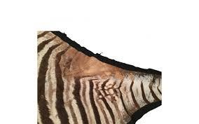 viyet designer furniture rugs vintage genuine zebra rug