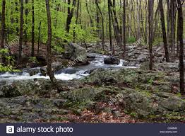 New York forest images Spring in the forest of upstate new york with young green leaves jpg