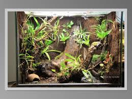 my latest rock wall tank 18x18x24 exoterra my aquarium