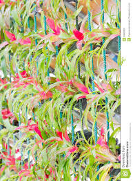 bromeliad vertical gardening stock photography image 35665932