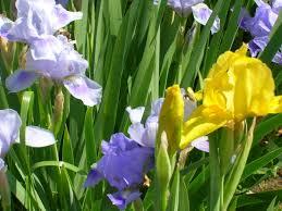 plante vivace soleil des plantes à floraison longue pour un jardin fleuri toute l u0027année