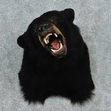 Black Bear Coffee Table Black Bear Shoulder Mount Taxidermy Bears And Room