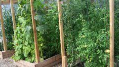 Arbor Trellis Ideas Creative Home Trellis Design Ideas In Wood Fence Repair Cost With
