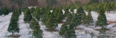welcome sugarland tree farm