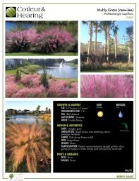native plants of florida plant of the month cotleur u0026 hearing landscape companycotleur
