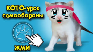 cat murka challenge for the kitten funny cat cats funny