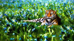 animals nature animals tigers flowers wildlife photos of