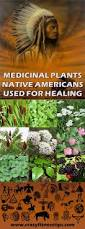native ginger plant medicinal plants native americans used for healing crazy fitness
