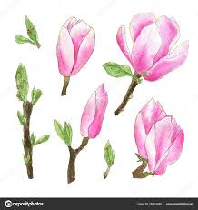 magnolia flowers watercolor magnolia flowers stock photo m ion 162014448