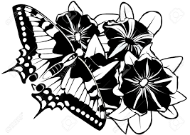 butterfly on flowers black and white illustration royalty free