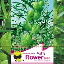 online buy wholesale flowers japanese from china flowers japanese