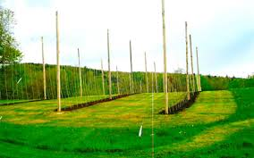 Low Trellis Hops A New Old Crop Growing Hops Commercially In Maine