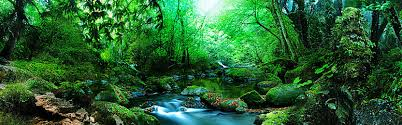 Deep Forest Green Forest Background Photos 6246 Background Vectors And Psd Files