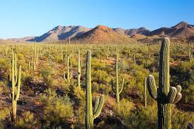 Arizona vegetaion images Sonoran desert wikipedia jpg