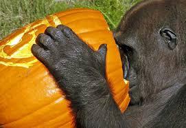 sin city halloween vancouver 9 friendly neighbourhood zoo animals celebrating halloween the
