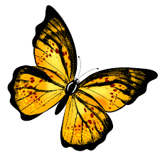 yellow transparent butterfly png clipart picture gallery