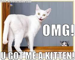 Cute Cat Memes - best 25 cute cat memes ideas on pinterest funny regarding stuff