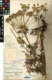 Types Of Botanical Gardens by Royal Botanic Garden Edinburgh What Is A Herbarium