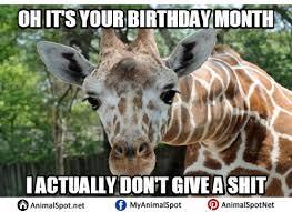 Meme Giraffe - giraffe birthday memes different types of funny animal memes