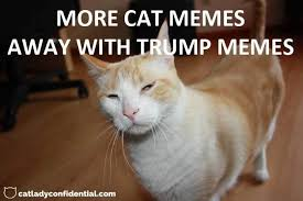 Thinking Cat Meme - the number one reason why my cat hates trump cat lady confidential