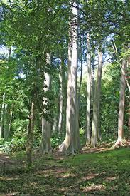ke u0027anae arboretum maui guidebook
