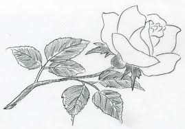 sketch of a rose you can do in less than a minute it is that easy
