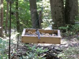 best feeders for backyard winter birds hubpages