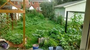 seeking fencing ideas for a small lot in the city with a problem