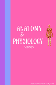 Fundamental Anatomy And Physiology 61 Best Anatomy U0026 Physiology Images On Pinterest Nursing Schools