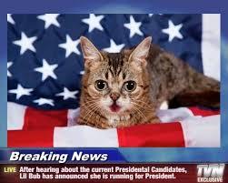 Breaking News Meme - lolcats breaking news lol at funny cat memes funny cat