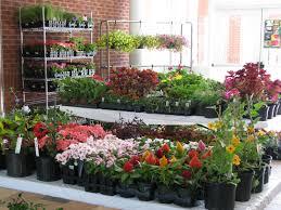 garden design tips for minimalist house home decorating ideas