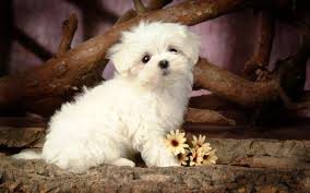 wallpapers of cute dog 86