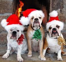140 best cute pet u0027s dress for christmas images on pinterest