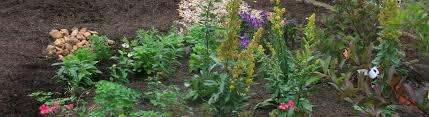 native plants for rain gardens create a rain garden blue water baltimore