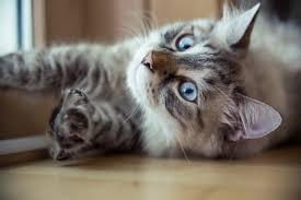 vliberals like cats conservatives like internet explorer quiz