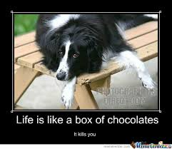 Life Is Like A Box Of Chocolates Meme - life is like a box of chocolates by embeddedneedles meme center