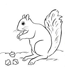 squirrel coloring page samantha bell