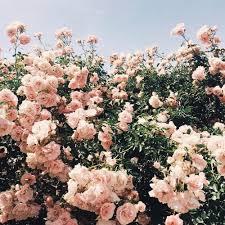 Flower Love Pics - i love flowers