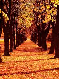23 best fall images on landscapes autumn and autumn fall