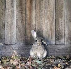 Emma Freud Rabbit Hutch Rabbit In A Burrow Sampson The Rabbit Pinterest Rabbit