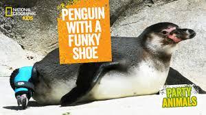 nat geo kids on youtube penguins playlist
