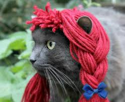 Halloween Costume Ideas For Pets 116 Best Moore Pets Images On Pinterest Animals Cat Stuff And
