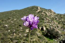 absolutely balloons san diego springtime best hikes to see wildflowers in san diego wilderness press