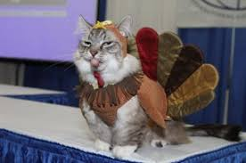 a happy cat thanksgiving gallery