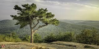 chi and tree mountain ny gustavo a castillo photography
