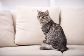 What Is A Chesterfield Sofa by Sofa Settee Or Couch Oxfordwords Blog