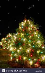green outdoor christmas lights outdoor christmas trees have been decorated with red green and