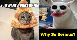 Funny Cats Meme - 10 funny cat memes that will make you go rofl