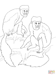 colobus monkeys coloring page free printable coloring pages